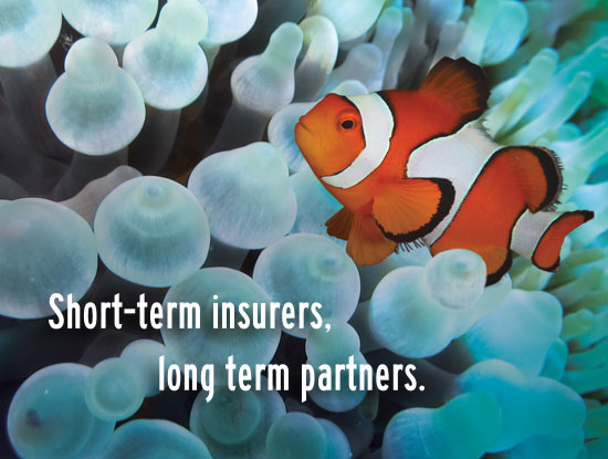symbiotic-relationships_fish