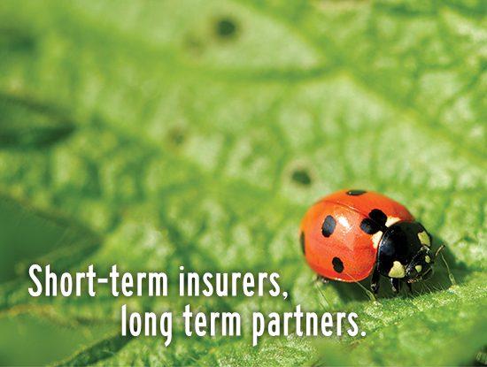 Safire Website_Symbiotic Relationship Mosaic 5_Ladybug