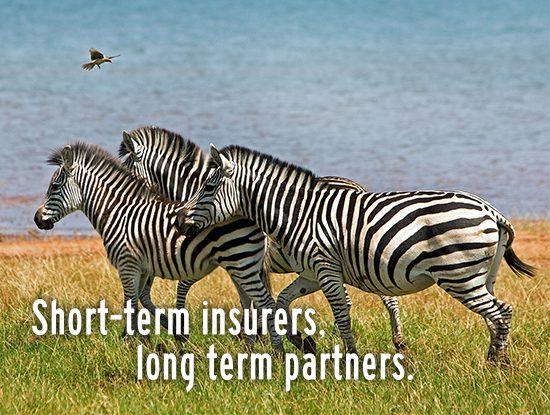 Safire Website_Symbiotic Relationship Mosaic 9_Zebra