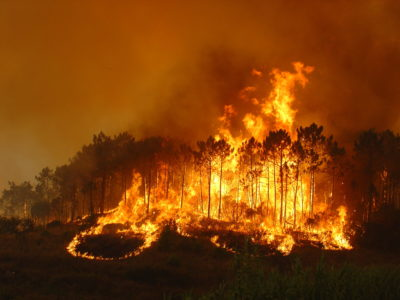 Plantation fire 2_Credit KZN FPA.jpg